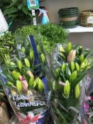 和平街花卉绿植